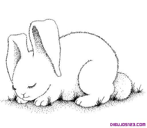 Dibujo de un dulce conejo para colorear