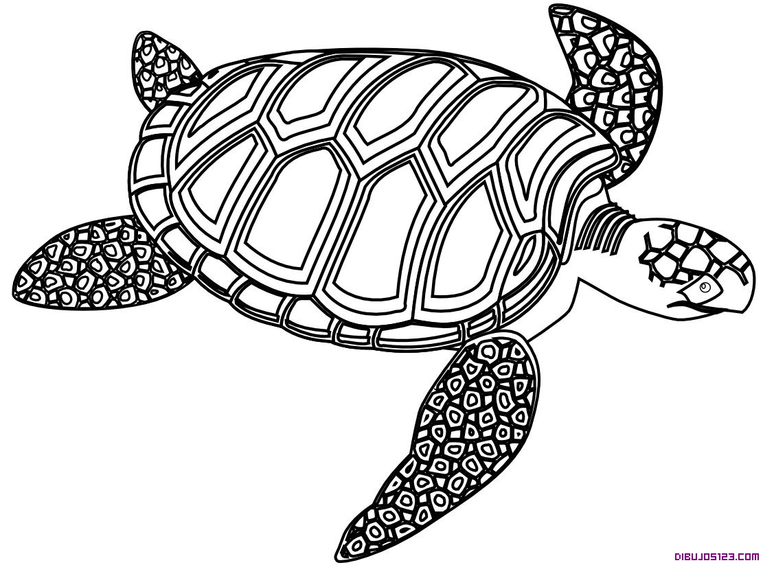 Tortuga del Caribe para colorear
