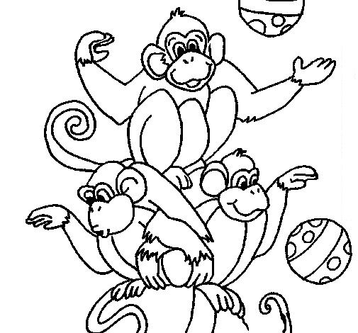 Monos artistas de circo