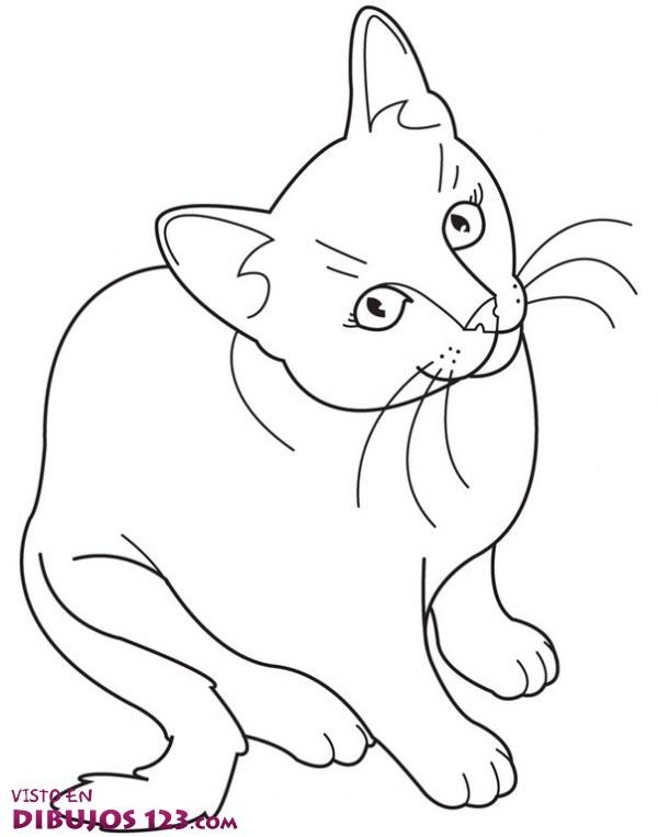 El gato nos mira fijamente