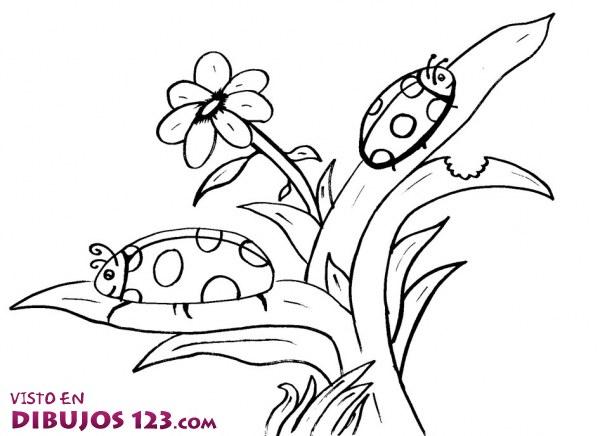 Los insectos y las plantas