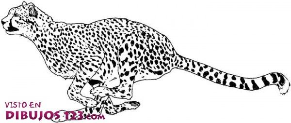 Leopardo para colorear