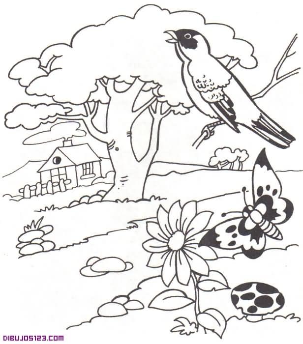 Pájaro cantando al bonito paisaje