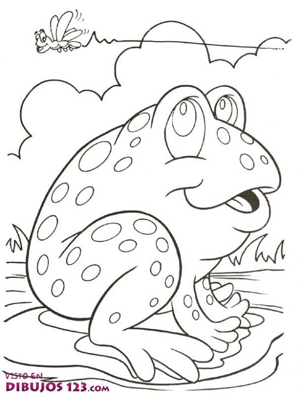 La rana y su presa