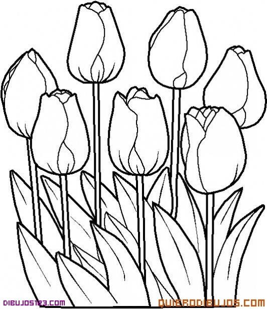 Rosas para colorear