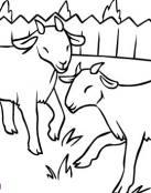 Pequeñas cabras jugando en el corral
