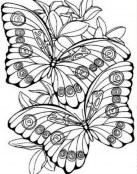 Dos mariposas para colorear