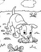 Perro haciendo agujero